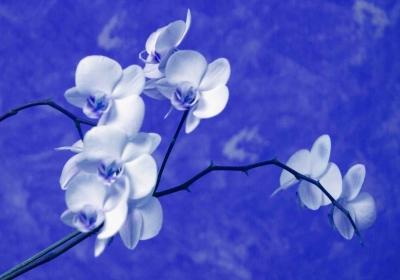 bonne anniversaire Fleur de Diamant 107310-a21e07