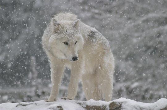 Alliance Ogame Wolves Index du Forum