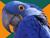 Les Véhicules Parrot-2edd30c