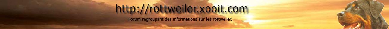 Rottweiler Index du Forum